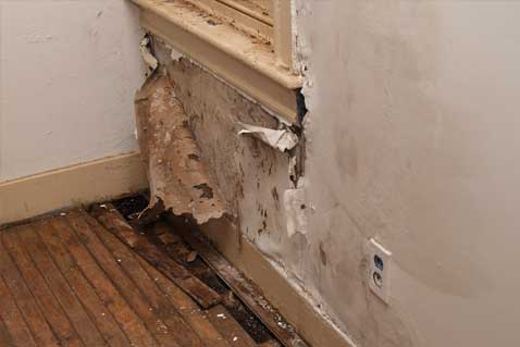 Water Damage Cleanup Plumber in Windsor